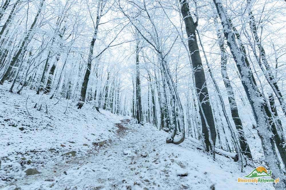 Drzewa pokryte śniegiem na szlakach.