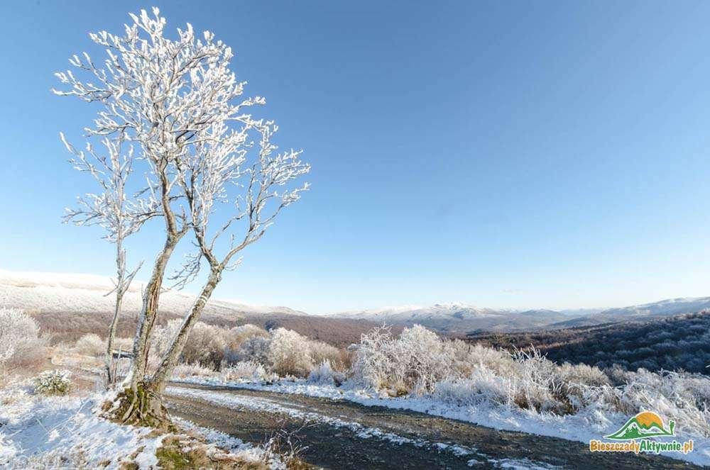 Oblodzone drzewo na szlaku wczesną zima w Bieszczadach.