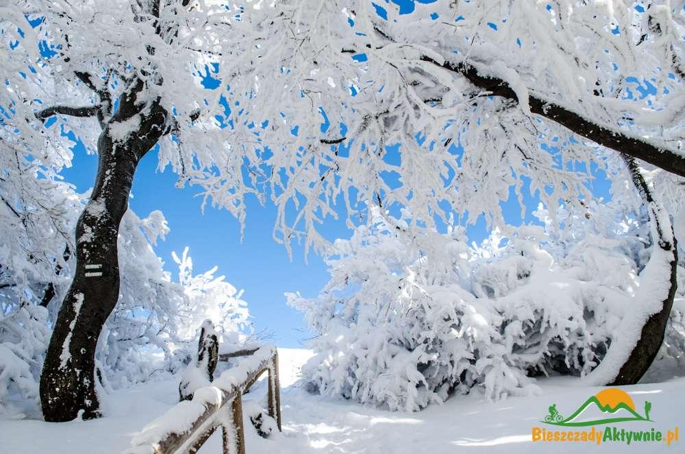 Wyjście na Połoninę Caryńską w zimie.